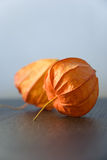 Physalis Royalty-vrije Stock Fotografie