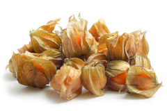 Free Physalis Royalty Free Stock Image - 12997176