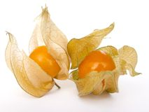 Physalis. Isolated on white background royalty free stock photography