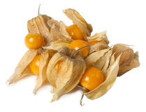 Physalis. Fruits of physalis isolated on white background royalty free stock images