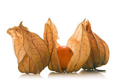 Physalis Foto de Stock Royalty Free