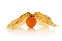 Physalis Fotografia de Stock Royalty Free