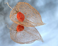 Physalis. A physalis on the mirror Royalty Free Stock Image