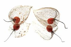 Physalis. A physalis on the mirror Royalty Free Stock Photography