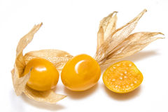 Physalis Stockfoto