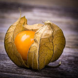 Physalis Photo libre de droits