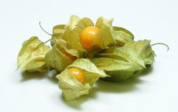 Physalis Stock Foto