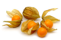 Physalis Stockbilder