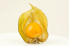 Physalis Immagine Stock