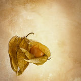 Physalis fotos de stock royalty free
