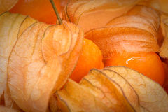 Physalis Photographie stock