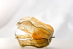 Physalis Photo stock