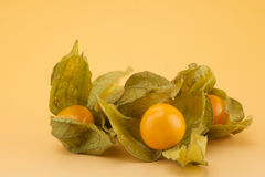 Physalis Photos stock