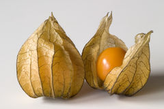 Free Physalis Royalty Free Stock Images - 630249