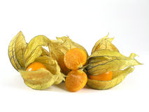 physalis Royaltyfria Bilder