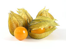 Physalis Fotografia Stock