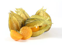 Physalis Royalty Free Stock Image