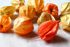 Physalis alkekengi autumn decoration Stock Photo