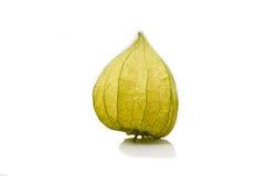 Physalis alkekengi fruit. Green dried husk on physalis alkekengi fruit isolated on white background Stock Photos
