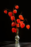 Physalis alkekengi im Vase Lizenzfreie Stockfotos
