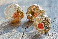 Physalis alkekengi on wood Stock Photos