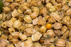 Physalis also known as winter cherries, cape gooseberries, ground cherries, love in cage or chinese lantern, aguaymanto. Stock Photography