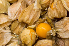 Physalis also known as winter cherries, cape gooseberries, ground cherries, love in cage or chinese lantern, aguaymanto. Stock Image