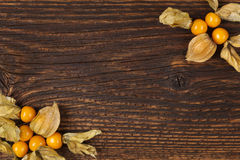 Physalis background with copyspace. Royalty Free Stock Images