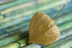 Physalis on Bamboo Stock Photos