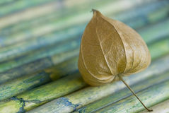 Physalis on Bamboo Royalty Free Stock Photography