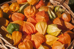 Physalis in a basket. Orange and green physalis in a basket Royalty Free Stock Photography