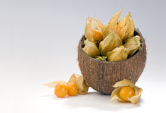 Physalis berries in coconut shell composition Royalty Free Stock Photography