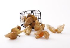 Physalis box Stock Images
