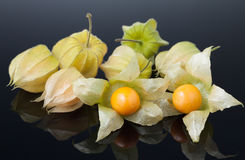 Physalis or cape gooseberry. Close-up physalis cape gooseberry on reflective  grey surface Stock Photo