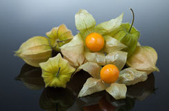 Physalis or cape gooseberry Royalty Free Stock Image
