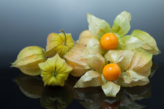 Physalis or cape gooseberry Stock Photo