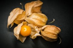 Physalis Cape gooseberry. Royalty Free Stock Photography