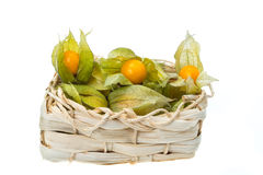 Physalis or Cape Gooseberry Stock Images