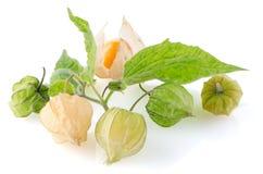 Physalis. Cape gooseberry (physalis) fruit on white background stock image