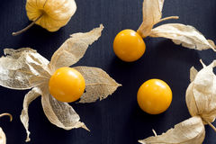 Physalis or Cape Gooseberry or Groundcherry Stock Image