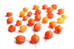 Physalis or Chinese Lantern Plants  on white background. Natural colorful autumn decorations: Physalis alkekengi Royalty Free Stock Image