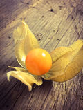 Physalis cultivé par amende Photographie stock libre de droits