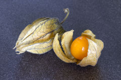 Physalis on a dark background stock photography