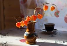 Physalis decorativo em um vaso Fotos de Stock Royalty Free