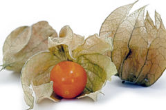 Physalis, a delicious tropical fruit Royalty Free Stock Images