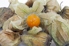 Physalis, a delicious tropical fruit Royalty Free Stock Photo