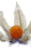 Physalis, a delicious tropical fruit Royalty Free Stock Image