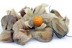 Physalis, a delicious tropical fruit Stock Photography