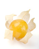 Physalis enige bes over wit Stock Foto's