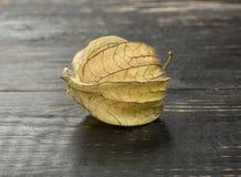 Physalis för ny frukt Arkivbilder